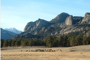 Mountain image with Elk in front
